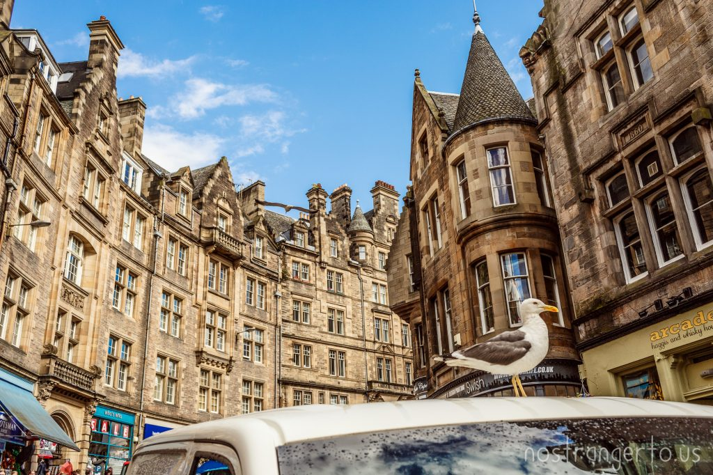 A seagull rests on a car in Edinburgh